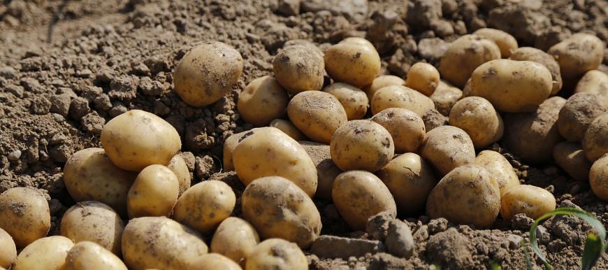 aardappelregen uit Holland